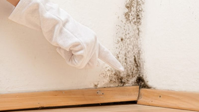 what-differences-between-mould-and-mildew