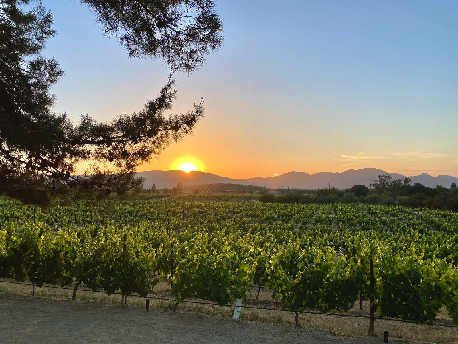 Valle de Guadalupe, Mexico: Complete Travel Guide